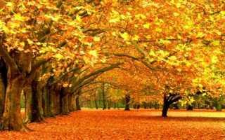 Приметы природы с березой зима. народные приметы, связанные с деревьями