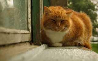 К чему приблудилась кошка в дом