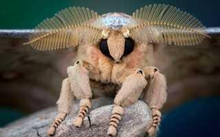Что такое бабочки ночные? значение babochki nochnie, энциклопедия кольера