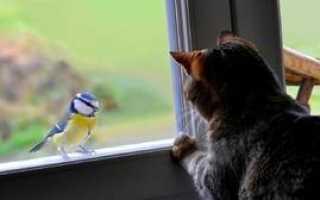 Что означает, если синица стучит в окно