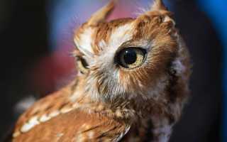 Исследовательская работа» сова- символ мудрости»