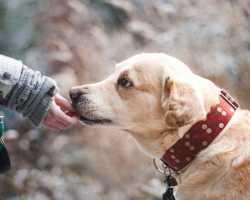 Гладить серую собаку