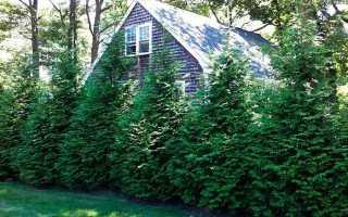 Какие деревья можно сажать возле дома, а какие нельзя — что говорят снип