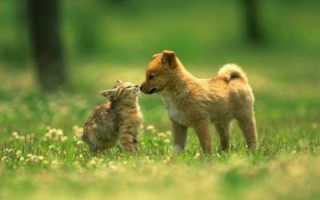 Кошка шипит: как успокоить питомца