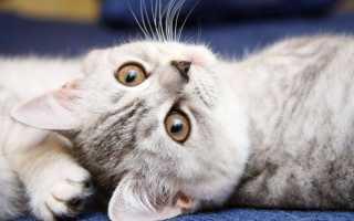 Почему нельзя обижать кошек: приметы и суеверия