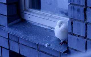 Голубь прилетел на балкон