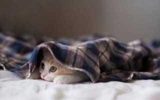 Как отучить кота орать: эффективные методы