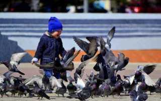 Что значит увидеть мертвого голубя