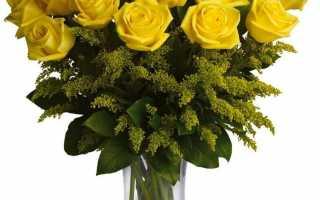 Что означает цвет роз: желтые, красные, белые