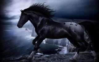 К чему снится черный конь, как толкуют образ сонники