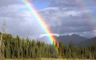 «правило радуги» как панацея от весеннего авитаминоза. советы врача петербуржцам
