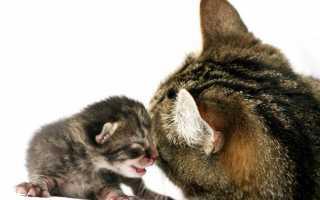 Все о родах у кошек: ответы на самые важные вопросы