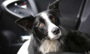 Соседи выгуливают собак на газоне у дома: что делать?
