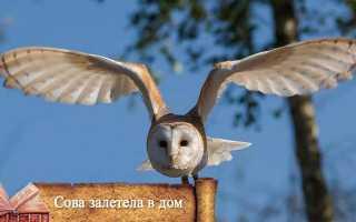 К чему увидеть сову