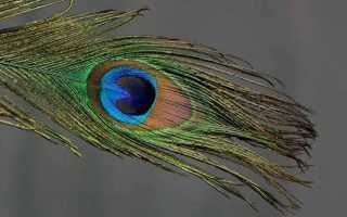 Что означает примета «найти перо птицы на улице»