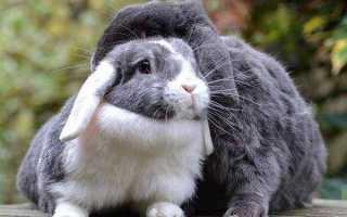 К чему снятся кролики женщине: белые, черные, серые, рыжие
