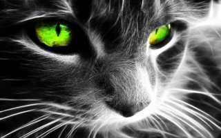 Кошки с разными глазами: аномалия или особенность породы
