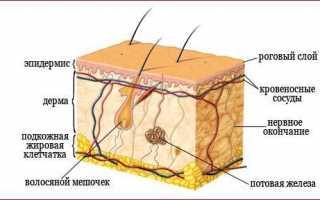 Как использовать перекись водорода от морщин на лице: важные правила, полезные советы, эффективные рецепты